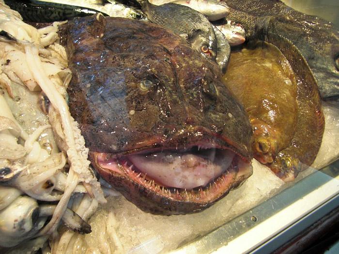 Seeteufel frisch von der Fischtheke